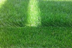 detailni-pohled-na-travnikovy-koberec