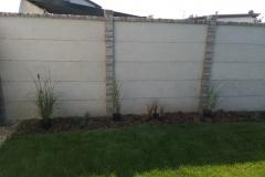 Trávníkový-koberec-položen-začínáme-s-osazováním-rostlin